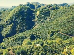 collina di cartizze in valdobbiadene - best prosecco from italy